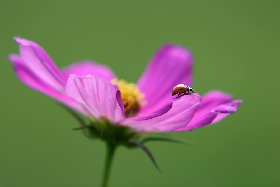 Ladybird.....