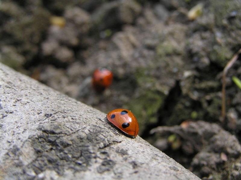 Ladybirds!!