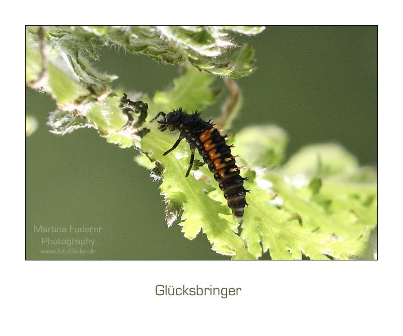 Ladybug to be ...