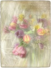 Lächeln der Frühlingsblumen...