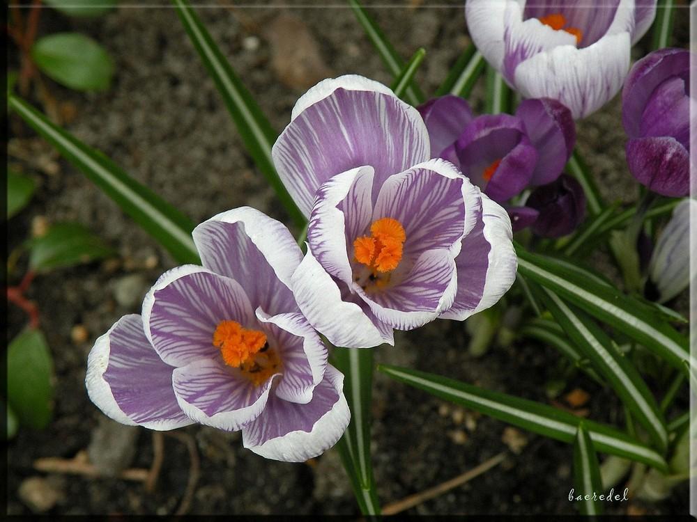 Lächeln durch die Blume <>