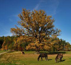 Ländliche Herbstidylle