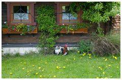Ländliche Idylle in der Steiermark