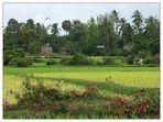 Ländliche Idylle - Kampot, Kambodscha