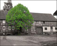 Ländlicher Hinterhof 17