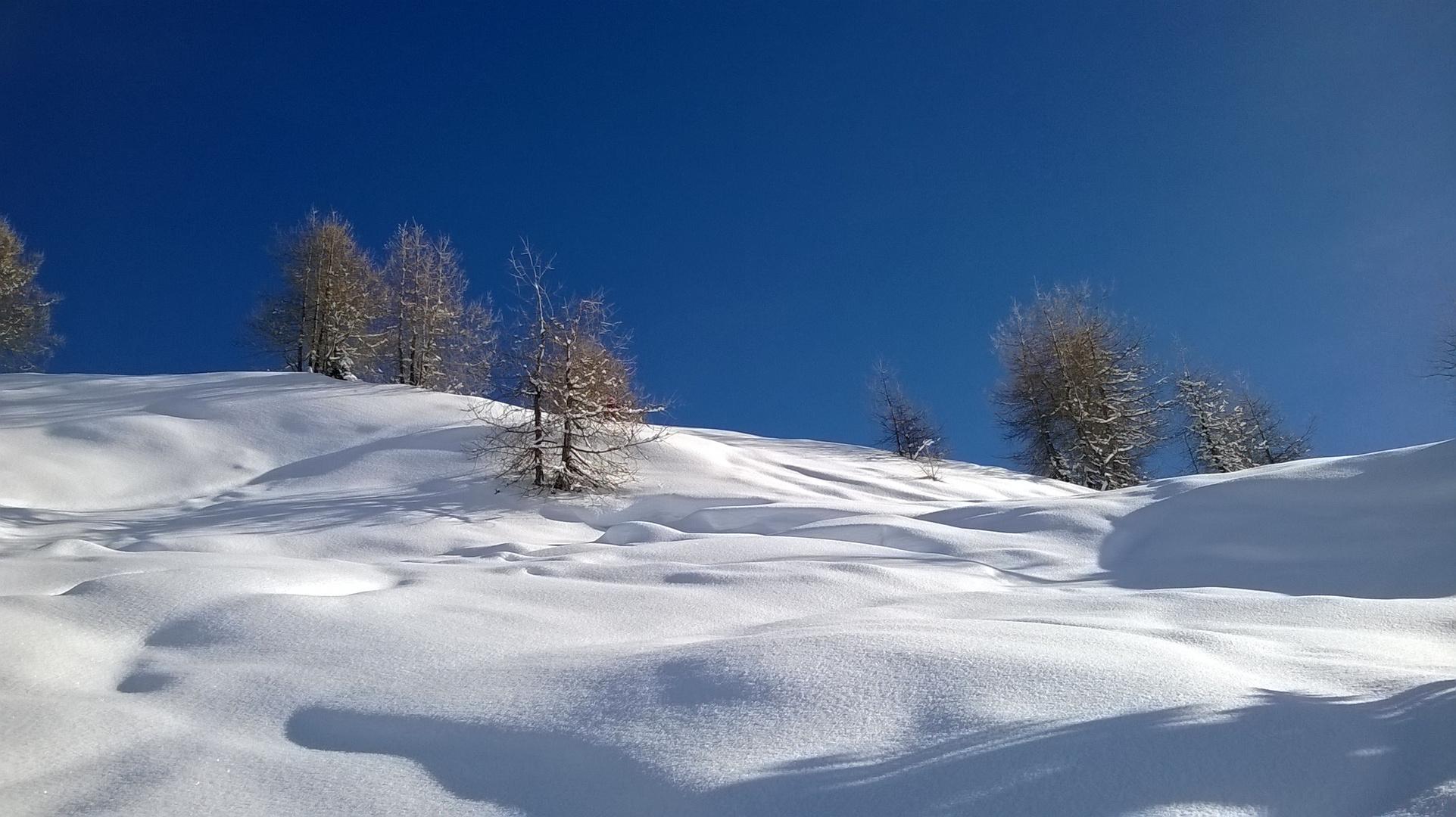 Lärchen im Schnee