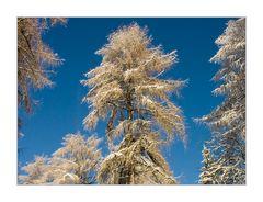 Lärchen- Winter- Märchen