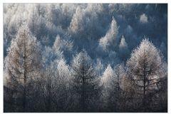 Lärchen- Winter- Wald- Strukturen - oder: wie Raureif Tiefe schafft...