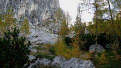 Lärchenwald im Herbst