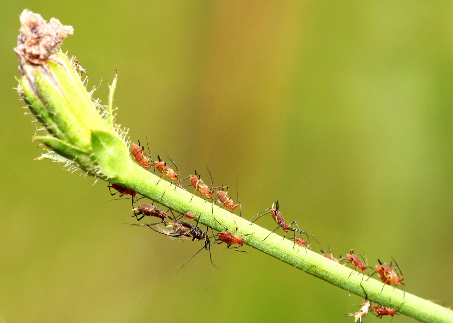l use schaschlik foto bild tiere wildlife insekten. Black Bedroom Furniture Sets. Home Design Ideas