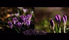 ....läuten den Frühling ein