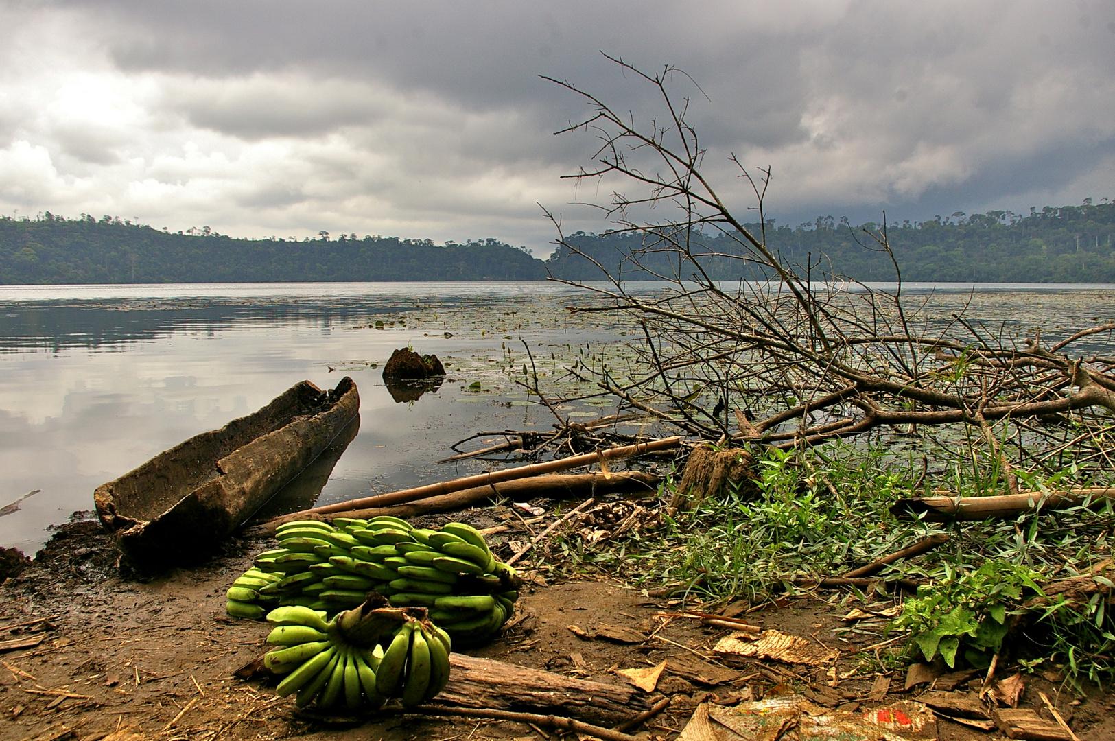 Lago Barombi Mbo