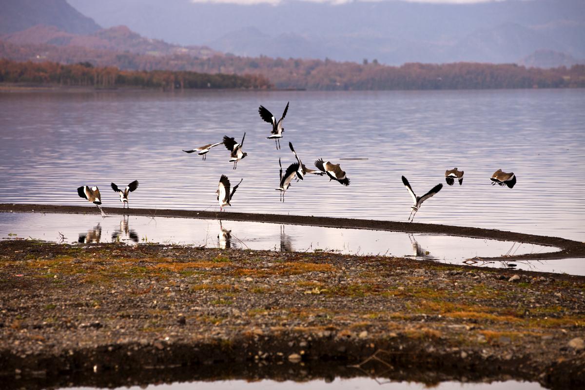 Lago Calafquén en Licán Ray, Villarrica, Chile