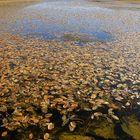 Lago delle Foglie