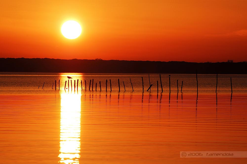Lago di Massaciuccoli - Oasi Lipu #2