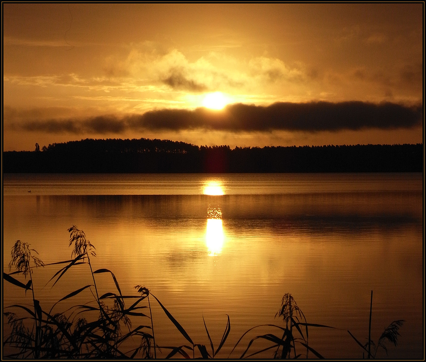lago dorado