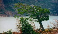 Lago Grey/ Torres del Paine