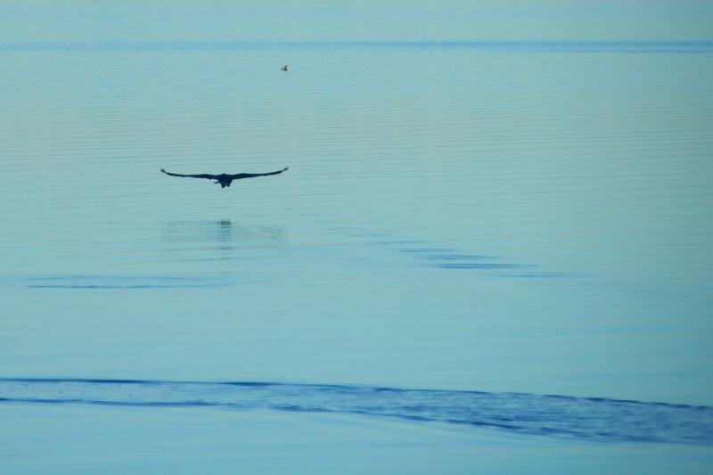 Lago Patria, Dicembre 2009