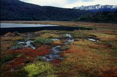 Laguna Negra, NP Tierra del Fuego, Argentinien