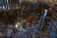 Laichklumpen im Waldtümpel