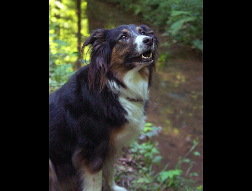 Laika sucht Abkühlung im Wald.....