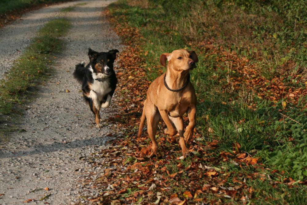 Laika und Sir Henry