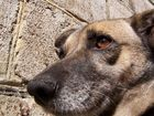 Laima ( der Name des Hundes )