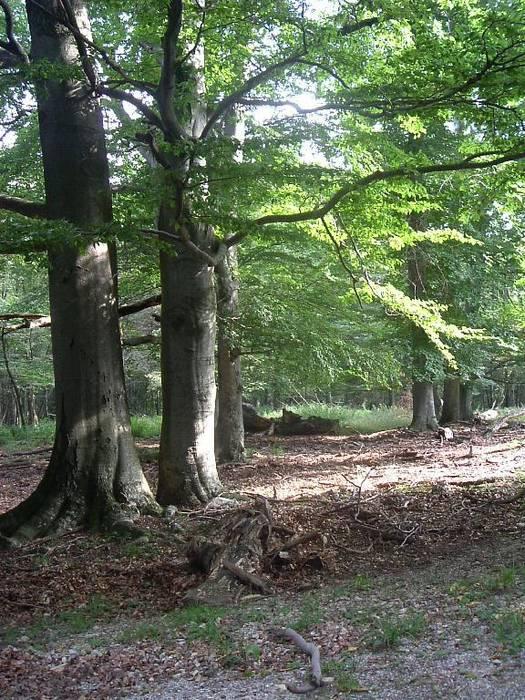 Lainzertiergarten September 2005