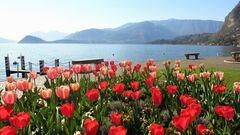 Lake flowers