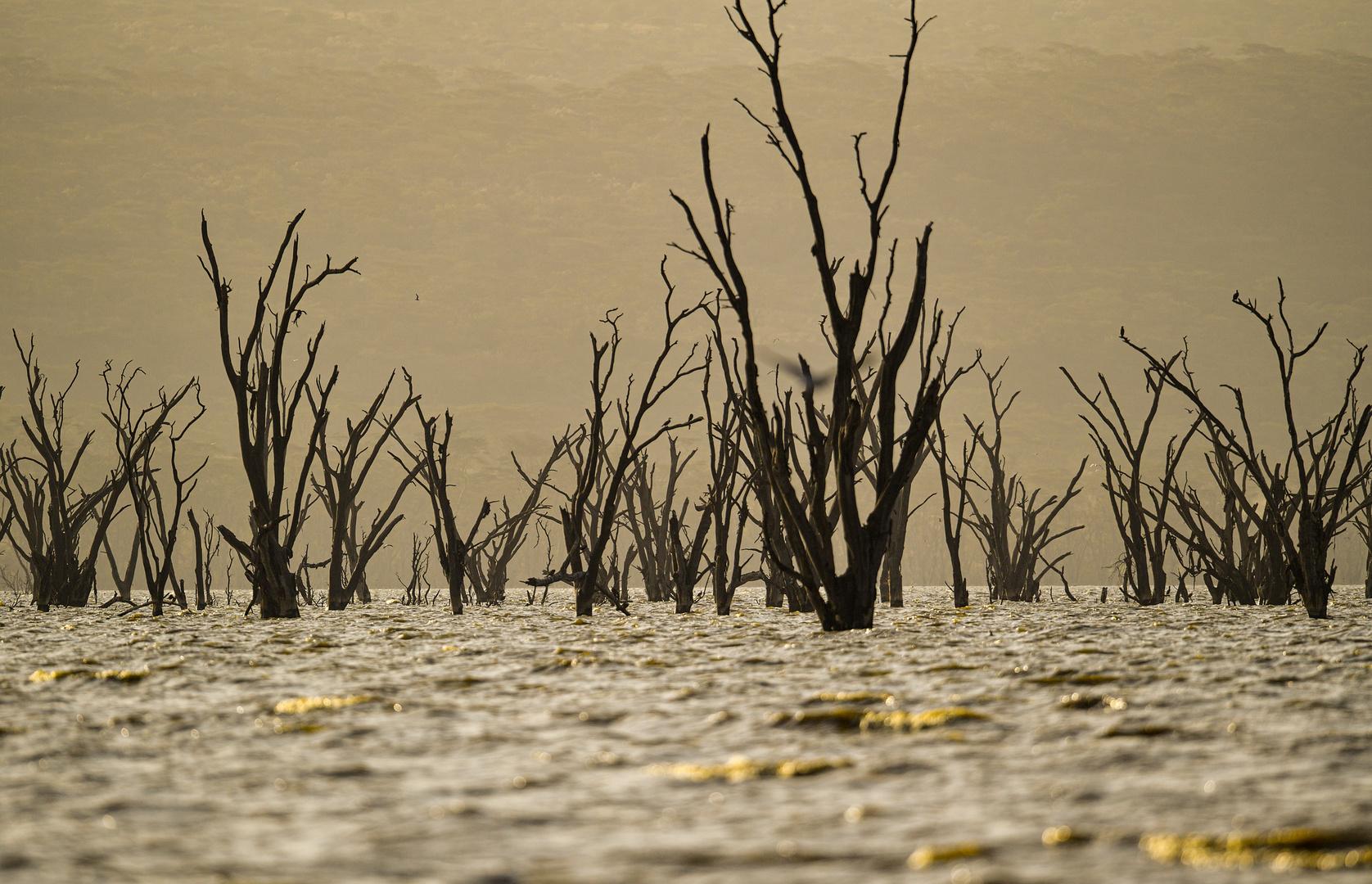 Lake Nakuru-Süd