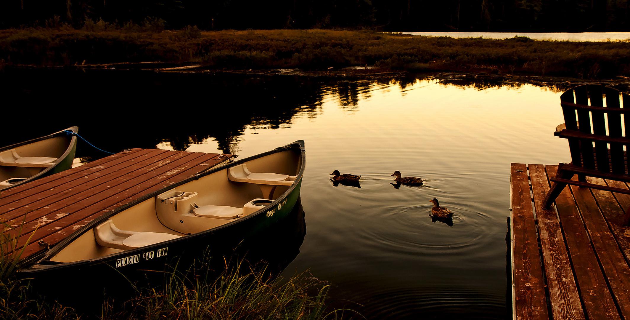 Lake Placid ducks