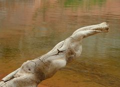 Lake Powell Nessie