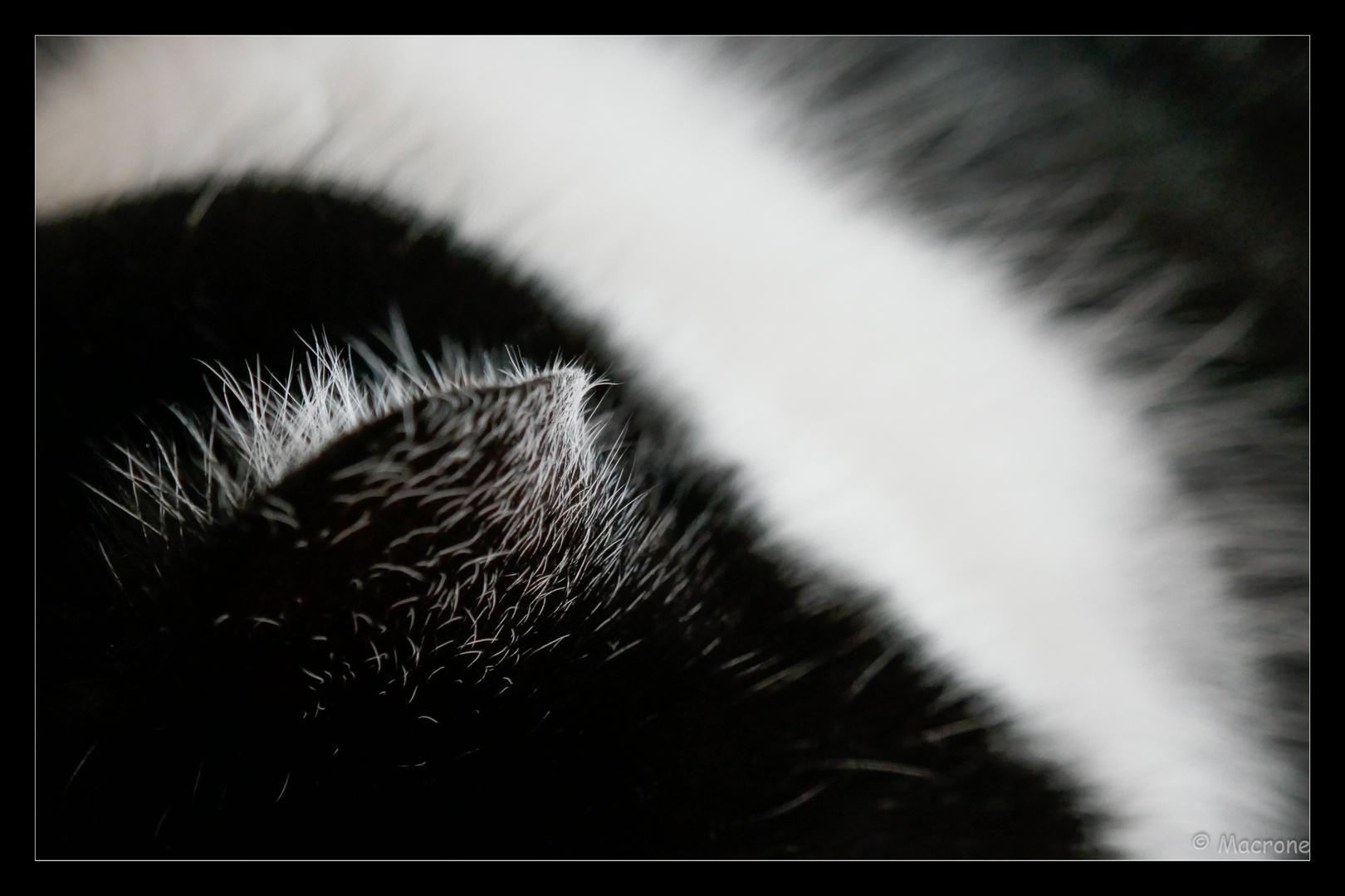 Lakritze Katze