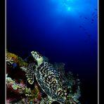 l'alba della tartaruga
