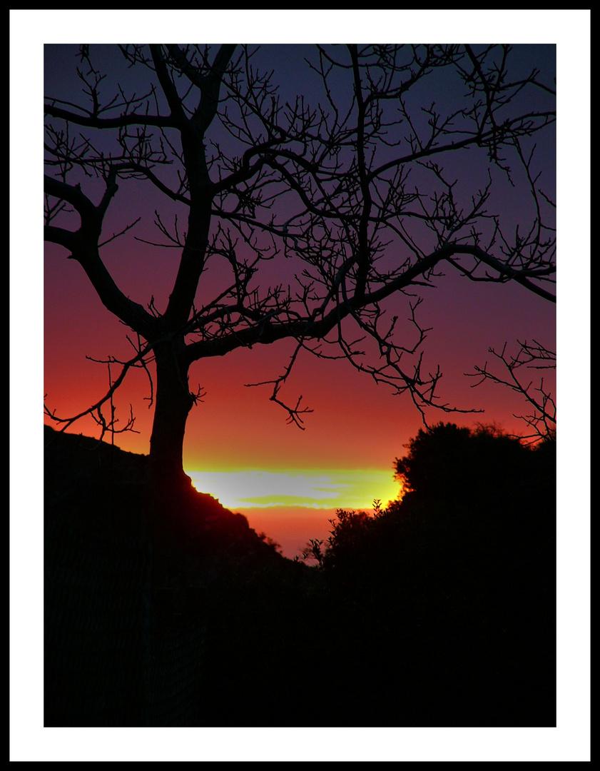 l'alba e l'albero