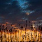 L'alba fra le canne