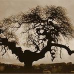 L'albero dei ricordi