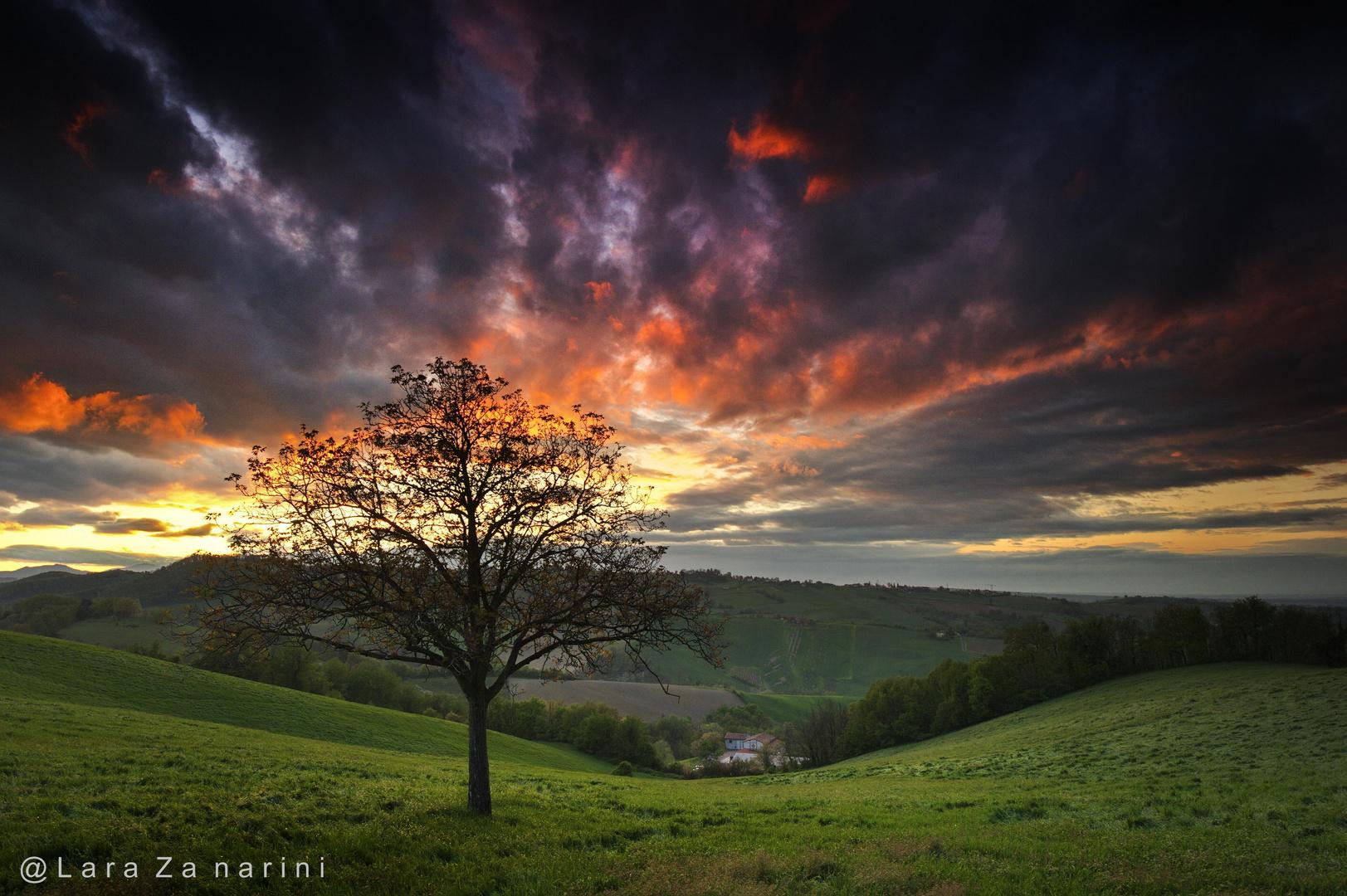 l'albero dei sogni