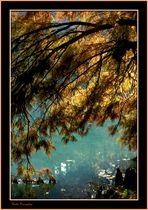 L'albero del lago.