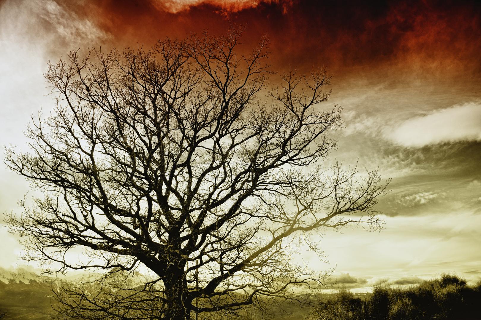L'albero della discordia