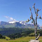 L'albero delle civette e la Marmolada