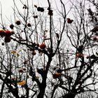 L'albero di cachi, i suoi rami come ragnatele.