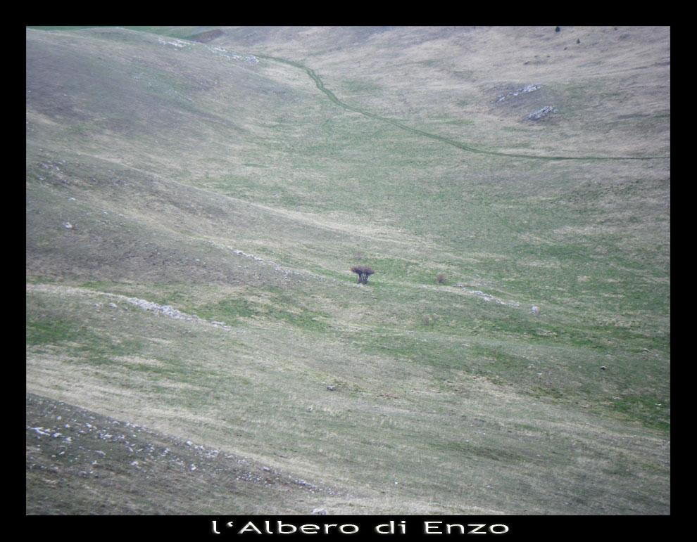 L'Albero di Enzo