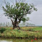 L'albero e l'acqua