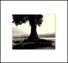 L'albero..