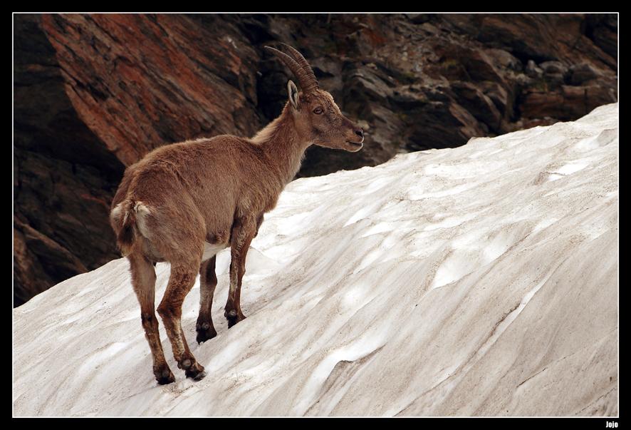 ...L'alpiniste...;-)