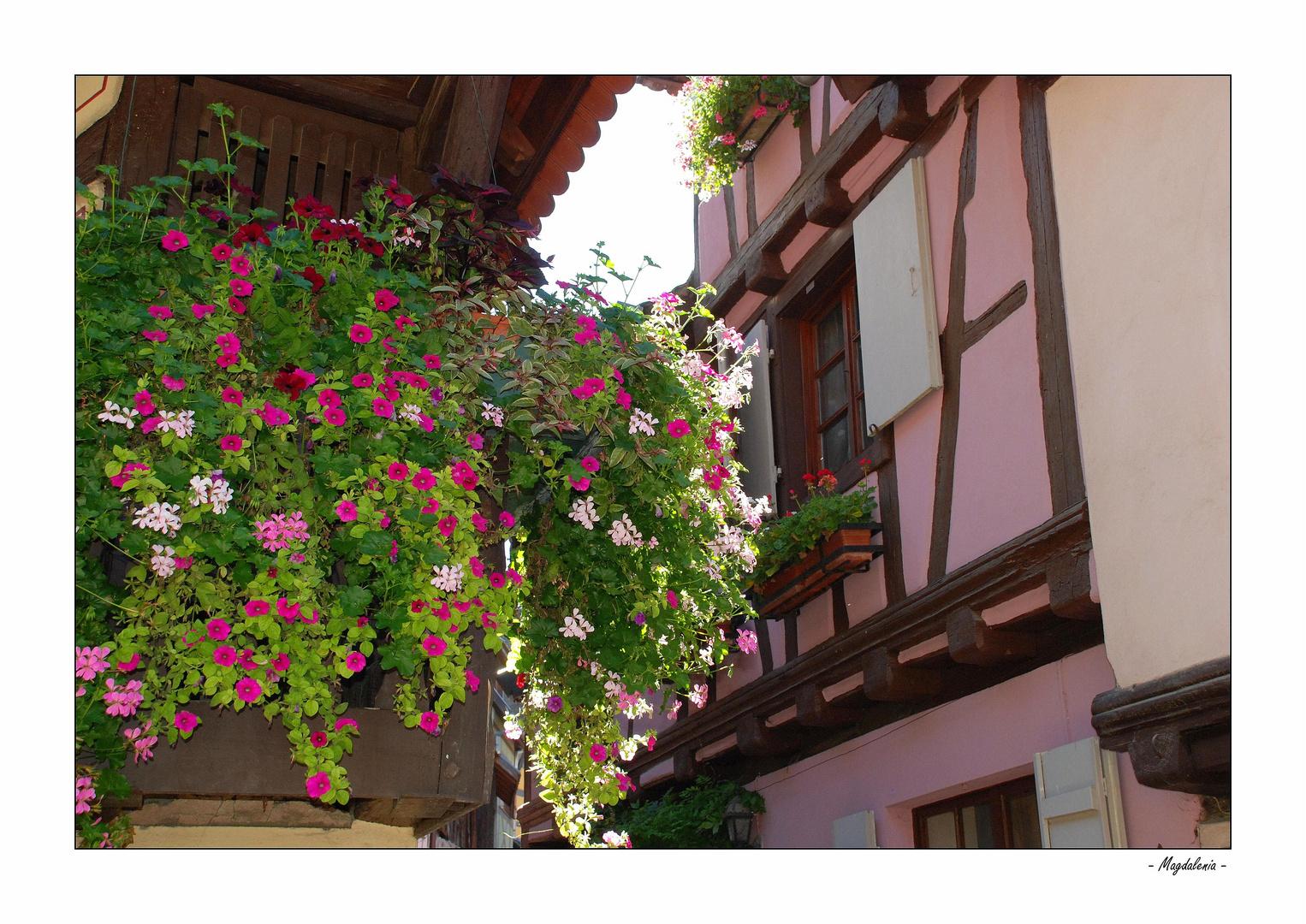 L'Alsace en ébullition
