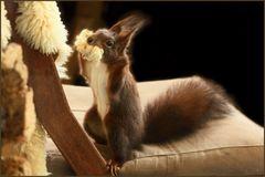 *Lammfell als Nistmaterial fürs Eichhörnchen* (1)