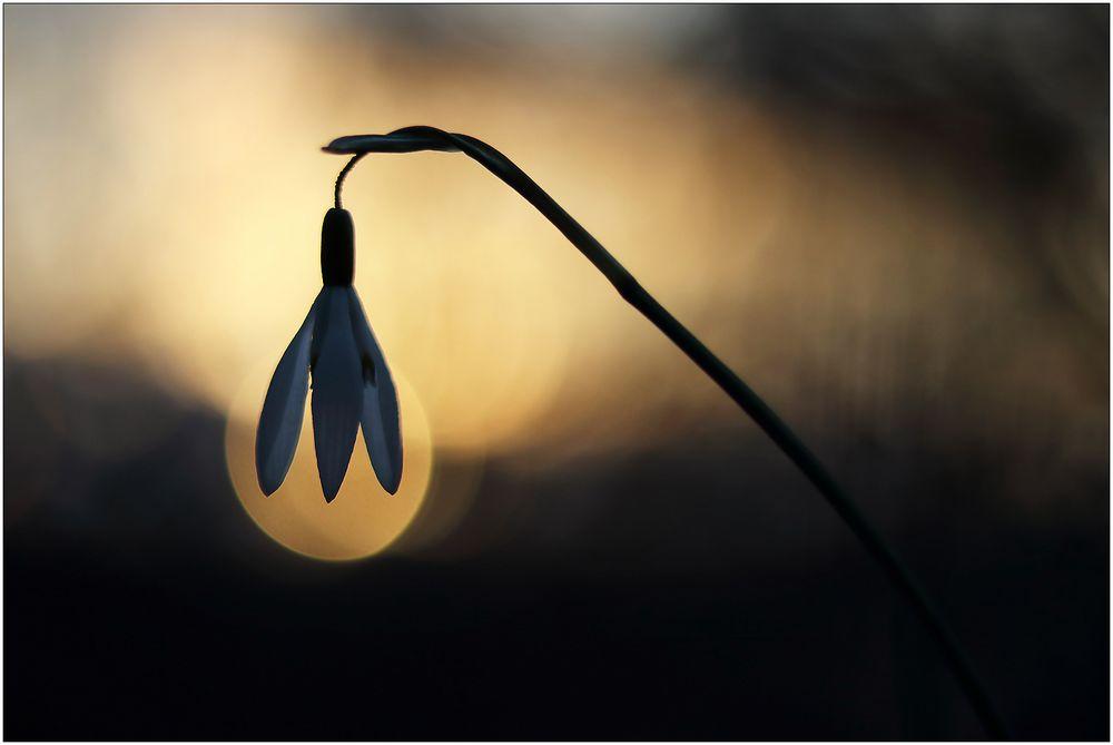 Lampenschirm...