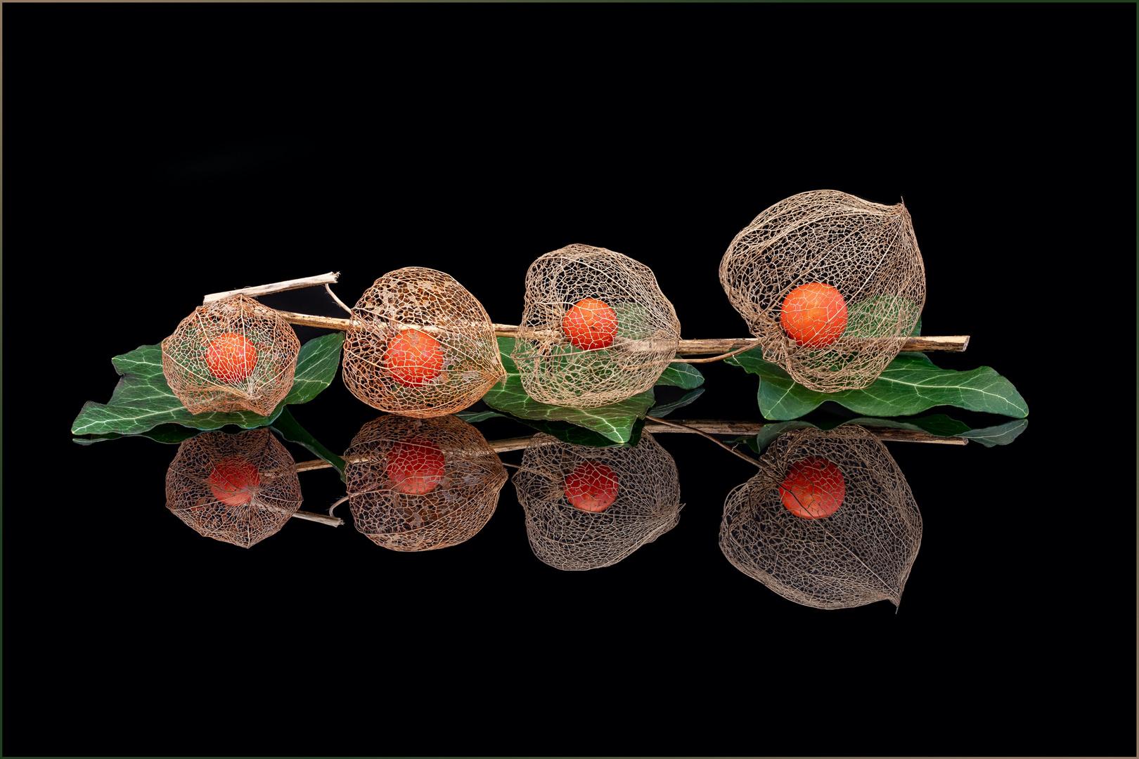 Lampionblume / Physalis
